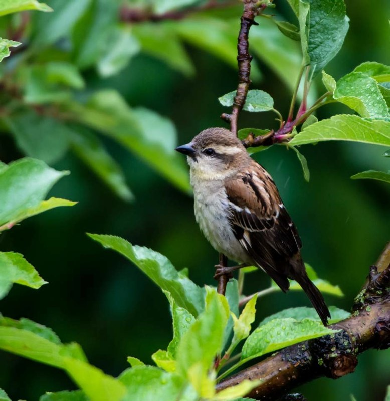 Bird watching and Photography Himachal